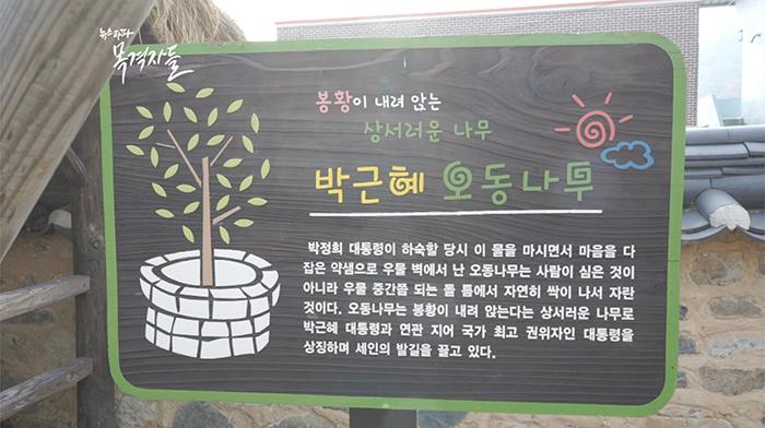 ▲박정희 전 대통령이 교사를 하며 3년 동안 묵었다는 문경에 있는 하숙집 청운각(위), 앞마당의 오동나무 이름은 '박근혜 오동나무'(아래)이다.