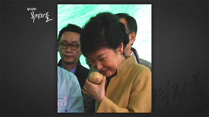 ▲ 박근혜 대통령이 감자 냄새를 맡으며 감자를 고르고 있다. (출처: 중부일보)